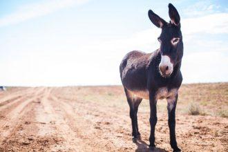 donkey-song